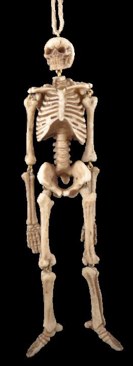 Skeleton small