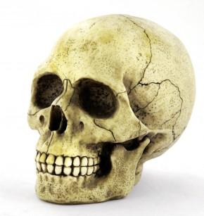 Small Skull Money Box