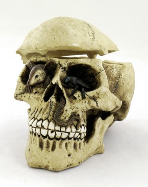 Box Skull with mouse