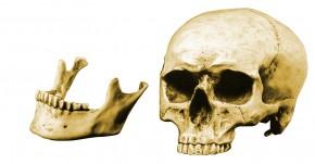 Anatomie Skull