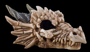 Drachenschädel